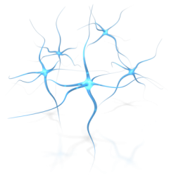neural clusters and you